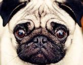 AnimalPictureSociety's avatar